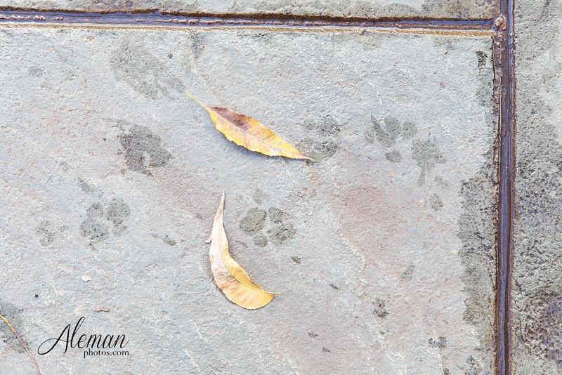 dallas-fall-engagement-winter-dogs-sanford-inn-aleman-photos013
